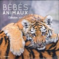 CALENDRIER BEBES ANIMAUX